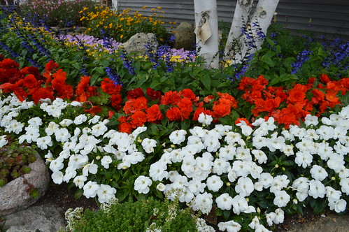 Red White And Blue Fourth Of July Summer Flower Bed In Provincetown