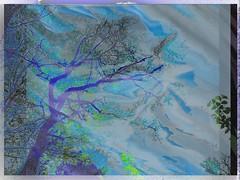The River - DSCF3302 (talya_allya) Tags: tree imageprocessing artisticmanipulation theawardtree art2015