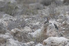 No me ves (Jose A. Parra) Tags: conejo escondite animales aire libre campo bosque
