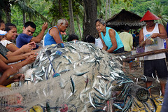 Removing fish from the net (Curufinwe - David B.) Tags: macrohon southernleyte leyte island philippines philippine visayas teampilipinas pilipinas filipinas pinas asia asian mer sunset village town fish sanctuary fishing boat sony