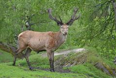 DSC_3897 (d90-fan) Tags: rauris raurisertal natur alpen salzburgerland sterreich nationalpark npht hohe tauern wandern krumltal seidlwinkeltal