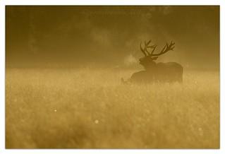 Red Deer Dawn Chorus