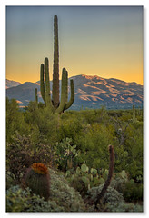 Post Card Sunrise, Saguaro National Park (Northern Pike) Tags: saguaronationalpark sunrise tucson arizona