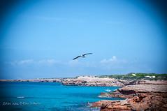 Liberi di volare! (Rha Di Bello) Tags: ibiza eivissa baleari travel spagna rhadibello