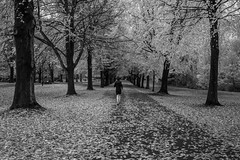 Autumn grove....... (Dafydd Penguin) Tags: blackandwhite blakwhite black white monochrome bw autumn leaves trees runner jogger clifton downs bristol uk england autmn grove nikon df nikkor 35mm af f2d