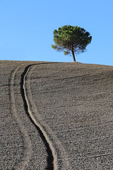 Solitude (callifra7) Tags: canoneos70d efs18135mmf3556isstm arbre tree toscane tuscany cretesenesi