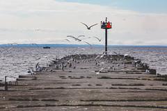 Whitefish Point State Dock Seagulls, Michigan (Tony Webster) Tags: michigan upperpeninsula whitefishpoint whitefishpointstatedocks gulls lakesuperior seagulls paradise unitedstates us