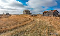 Up the lane... (Pat Kavanagh) Tags: alberta prairies prairie bowisland landscape farm homestead abandoned rusting rusted decay barn