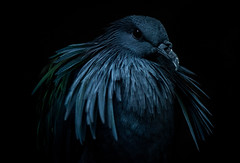 Moody Bird (Brandon_Hilder) Tags: