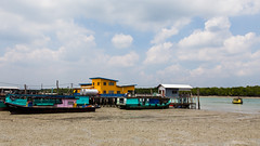 L'île aux crabes (Erminig Gwenn) Tags: vert 6061 canoneos6d canon6d adobelightroomcc adobelightroom6 lightroom fullframe pleinformat 24x36 malaysie malaysia asie asia ville city town ile île island mangrove swamp wetlands wetland fishing chinees chinois pêche pêcheurs bateaux boats barques enmbarcations couleur colors jaune yellow green turquoise