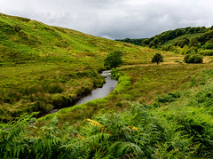 Exmoor National Park (_gp_) Tags: heide jahreszeit natur landschaftsaufnahme aufnahmeart sommer feldweidewiese feld weide wiese