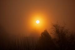 Glow (Future-Echoes) Tags: 4star 2016 glow light mist morning orange silhouettes sun sunrise