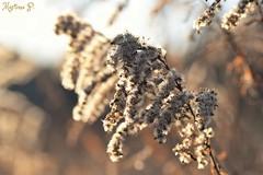 December sun... (martinap.1) Tags: makro macro sigma 105mm nikon d 3300 nature