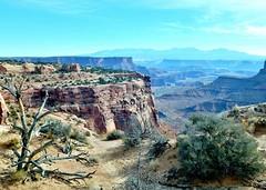 From the Edge (Neal3K) Tags: canyonlandsnationalpark utah desert geology landforms rocks