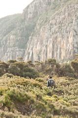 Tasman Peninsula (Cape Raoul) - Bushwalking infront of the cliffs (m_neumann) Tags: australien caperaoultrack tasmanien tasmania australia discovertasmania caperaoul bushwalking cliffs cliff cape raoul tasmannationalpark