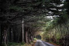tunnel (zenofar) Tags: portugal madeira strasse street baum tree tunnel nikon d810 natur nature wald forrest dof deep route