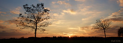 Autumn-Tree-Silouhette-sundown panorama (leaving-the-moon) Tags: 201610 autum baden baume colors deutschland germany goodlight hebst himmel kraichgau landscape landschaft natur nature season sky sonnenuntergang sundown wolken