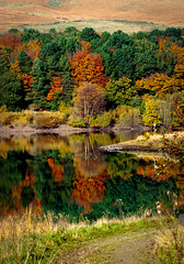 A British Autumn (Missy Jussy) Tags: british greatbritian unitedkingdom england landscape lancashire rochdale ogden newhey piethorne piethornevalley reservoir water reflections autumn colourful leaves trees path footpath canon cannon600d canon100mm