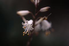Tiny Beauty (hploeckl) Tags: macro flower exotic botanicalgarden nikon d740 1050mmf28