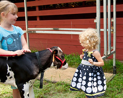 Audrey at the 2012 Ogemaw County Fair (hz536n/George Thomas) Tags: 2012 audrey august cs5 canon canon5d ef24105mmf4lisusm michigan ogemawcounty ogemawcountyfair summer westbranch lab upnorth cow calf 4h labcolor smörgåsbord