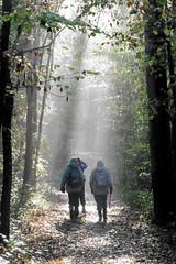 Into The Light (Alan1954) Tags: walking sussex loxwood three rays light platinumpeaceaward