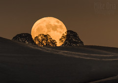 Like A Big Pizza Pie... (Explore #13) (mikeSF_) Tags: california contracosta brentwood antioch sky moon moonrise fullmoon super supermoon outdoor pentax k3ii dfa150450 450mm published press newspaper