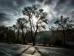 Schatten (judith74) Tags: brandenburg brandenburganderhavel baum sonne schatten lichtundschatten