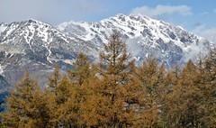 Haut de Cry (bulbocode909) Tags: valais suisse alpagedutronc montchemin montagnes nature neige arbres mlzes hautdecry nuages bleu paysages
