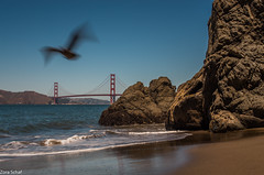 flying (zora_schaf) Tags: chinabeach seacliff california kalifornien beach strand bird flying sanfrancisco goldengate bridge kste meer sea pacific zoraschaf