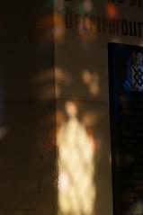 DSC_2529 (timmie_winch) Tags: timwinchphotography helmingham helminghamhalldeer helminghamhall helminghamdeer deer roedeer reddeer fallowdeer nikon d300 nikond300 50400mm sigma50400mmlens sigma wildlife wild wildlifephotographer wildlifephotography 2016 november november2016