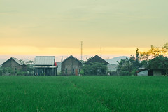 Sunset Over Homes & Rice Paddy (AdamCohn) Tags: adamcohn bali buleleng indonesia agriculture clouds goldenhour goldenlight homes houses rice ricecrop ricepaddies ricepaddy sunset wwwadamcohncom