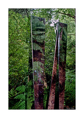 Nature Reflecting Back (paulinecurrey) Tags: woods forest park sculpture reflections plants reflectionsofthewoods foliage colour color green nature art creative furns trees branches naturallight leaves serene mirrors mirro mirror mirrorimage detail