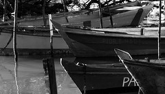 IMG_0065 (vianalucao) Tags: bw black white blackwhite blackandwhite pretoebranco pb preto e branco brasil aracaju sergipe nature natureza brazil boats lake boat