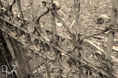 Haunted house's gates (diemmezeta) Tags: seppia sepia gates cancello cancelli gate detail details dettaglio dettagli verona veneto building buildings edificio edifici architettura casa house hauntedhouse casastregata creepy scary ruined