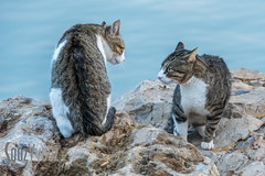 Cat Confrontation (Sue_Hutton) Tags: maroc morocco november2016 rabat autumn northernmorocco