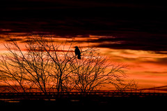 Silhouette (Pasi Mammela) Tags: fs161204 mystik fotosondag