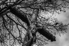 (CREE PING) Tags: inri jesus christ croix cross religion calvaire crucifixion bretagne breizh bzh blanc nature ngc nantes naoned noir 44 44240 landscape loireatlantique lachapellesurerdre monochrome france french canon canon7d creeping