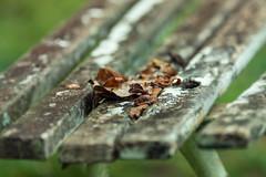 Dry Leaves (WR Takiguchi) Tags: leaves light colors bench countryside brazil nature nikon sigma mood autumm fall loneliness nostalgia freedom lifeless focus imagination story world