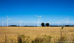 Champs d'éoliennes du nord de la pologne