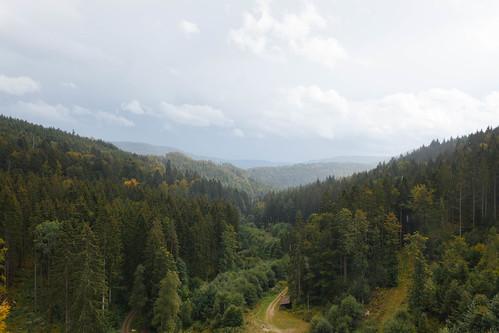 Vue sur la forêt depuis le barrage du Schwarzenbach-Talsperre