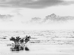"""surreal Cape Tribulation • <a style=""""font-size:0.8em;"""" href=""""http://www.flickr.com/photos/44919156@N00/21708366134/"""" target=""""_blank"""">View on Flickr</a>"""
