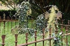 277/365 Overgrown !! (timmynomates2003) Tags: overgrown churchyard 365 tombstones 277365