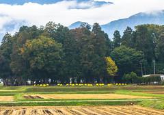 (Digital_trance) Tags: autumn food fall japan landscape cuisine maple tea gourmet nagoya