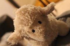 IMG_7053 (laelia01) Tags: portrait animal beige chou yeux mouton petit peluche factice