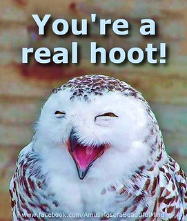 You're a Real Hoot