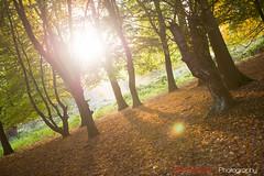 Hatfield_Forest-44 (Eldorino) Tags: park uk morning autumn trees nature forest sunrise landscape countryside nikon britain centre jour hatfield bishops stortford essex hertfordshire stanstead hatfieldforest