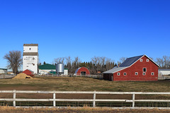 Menaik Alberta Grain Elevator (Wilson Hui) Tags: red horses canada barn rural wooden farm farming historic alberta remote agriculture grainelevator woodenbuilding redbarn equine whitefence grainery sunnyday lowtech smallfarm awp grainbin sunny16 clearbluesky albertawheatpool menaik