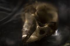 Remnant (Greg Pellizzi) Tags: bird lens skull nikon decay mason dirt jar corpse nikkor remains remnant whacking nikonandcanon nikon50mm hitrecord canon7d unholyabomination lenswhacking thelensproject003