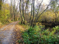 An der Rems (almresi1) Tags: river germany way path ludwigsburg weg remseck rems flus