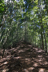 (Eddy_TW) Tags:  taiwan  taichung    mountains  travel canon  trees